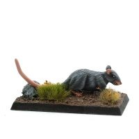 Giant Rat - Scurry-Ratty