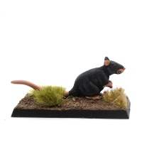 Giant Rat - Sewer-Ratty